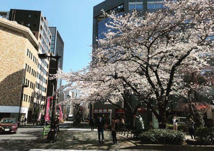 お悩み相談会&夜桜ナイトマーケット