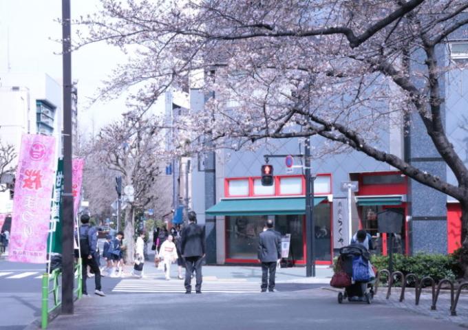 緑道の桜が咲きました